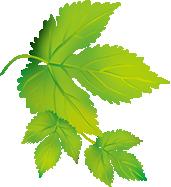 left-leaf